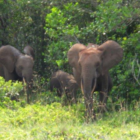 Loango National Park, الجابون: photo5.jpg