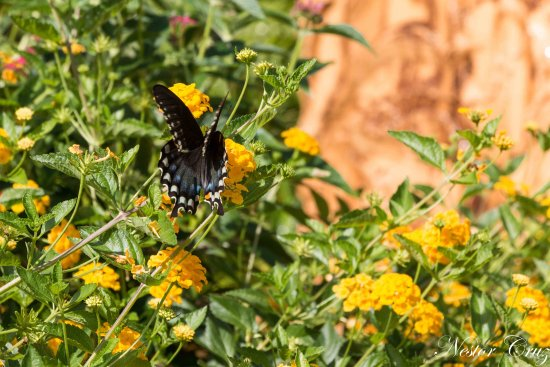 mariposa - Picture of Busch Gardens, Tampa - TripAdvisor