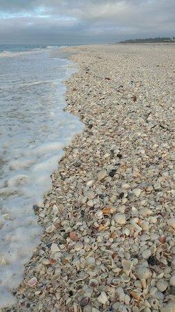 Little Gasparilla Island, FL: IMG_20180129_082005570_large.jpg