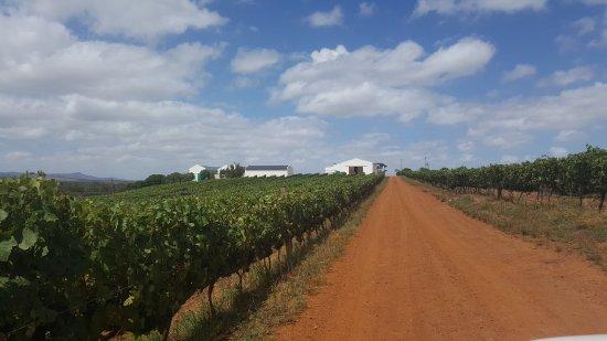 Zoetendal Wines