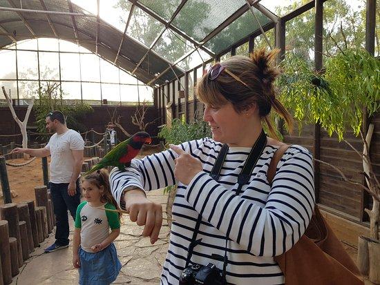 ניר דוד, ישראל: Bird feeding