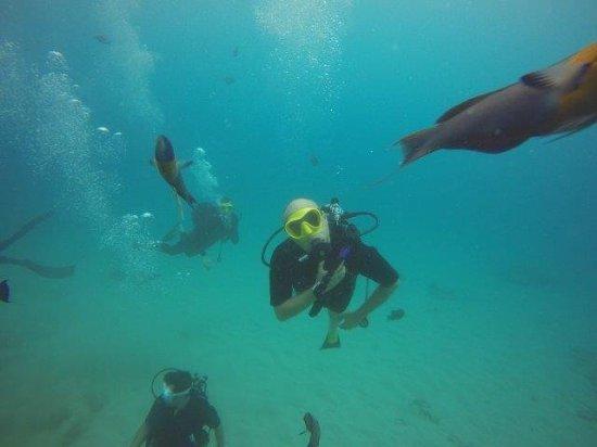 Oahu Diving: 023_large.jpg