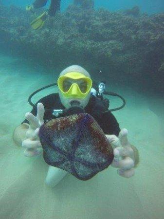 Oahu Diving: 118_large.jpg
