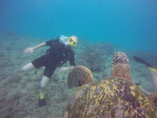 Oahu Diving: 138_large.jpg