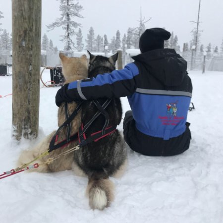 Kamisak Husky and Horse Expeditions - Day Tours: photo1.jpg
