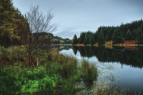 Loch Drunkie - Picture of Three Lochs Forest Drive
