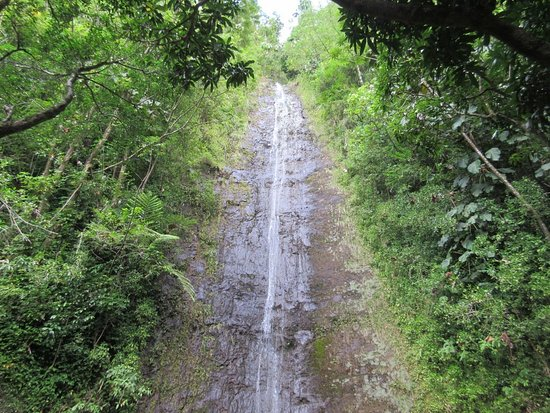 Manoa Falls: View of the Falls at the end of the trail.