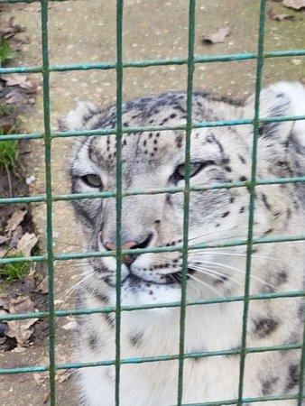 The Big Cat Sanctuary: 20180130_135551_large.jpg
