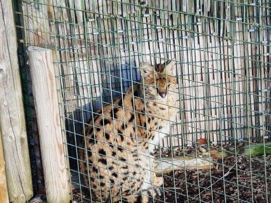 The Big Cat Sanctuary: 20180130_145209_large.jpg