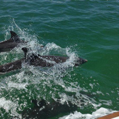 Dunedin Sailing Charters