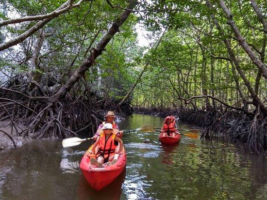 The ultimate mangrove kayaking adventure in Langkawi.