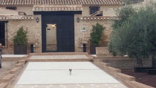 Lietor, إسبانيا: Mi perro también disfruto.😉