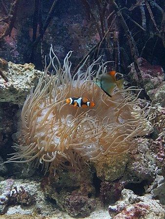 Birch Aquarium at Scripps: 20180201_090848_large.jpg