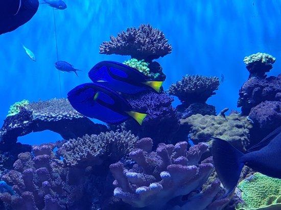 Birch Aquarium at Scripps: 20180201_091103_large.jpg