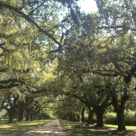 Boone Hall Plantation Tours Reviews