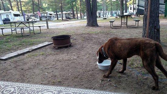 Yankeeland Campground Photo