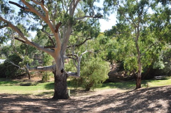 The Courthouse Reserve - come and have a picnic