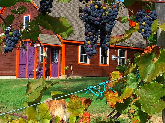 Cherryfield, ME : We use the finest grapes and berries to make our wines.