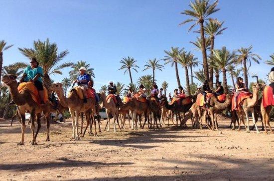 Camel Ride i Palm Grove i Marrakech