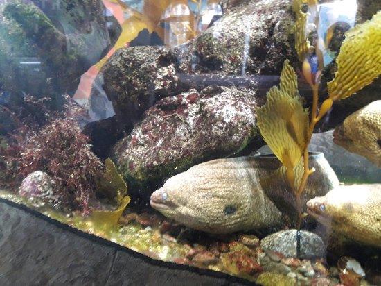 Santa Monica Pier Aquarium: 20180128_151501_large.jpg