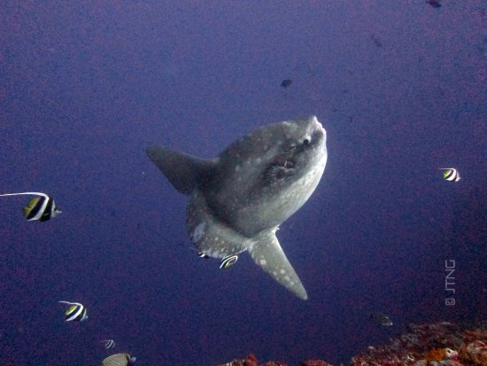 Mola Mola Dive Lembongan