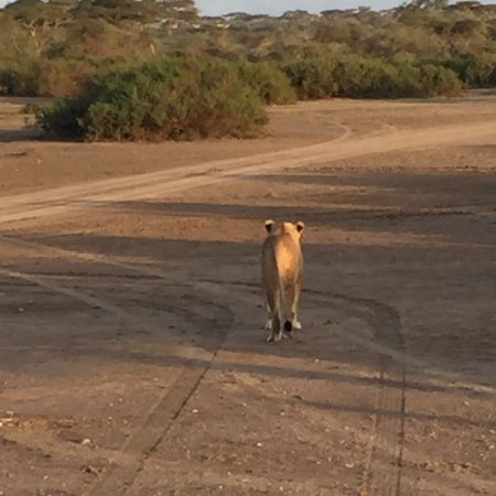 Ndutu Safari Lodge : photo1.jpg