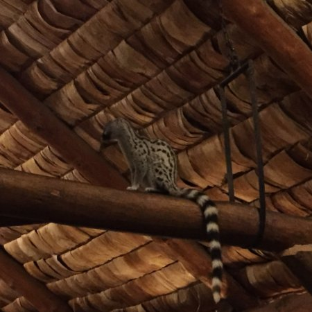 Ndutu Safari Lodge : photo2.jpg