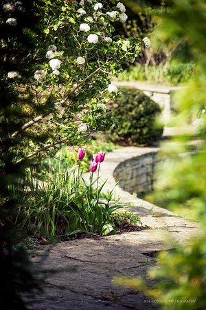Stradbally, Ireland: Tulips in Lutyens Garden