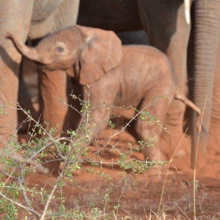 Meru National Park, Kenya: photo0.jpg