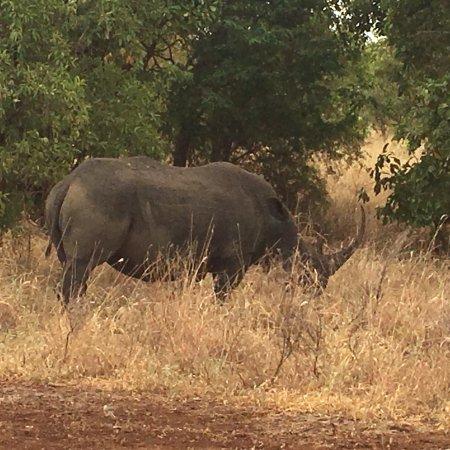 Meru National Park, Kenya: photo3.jpg