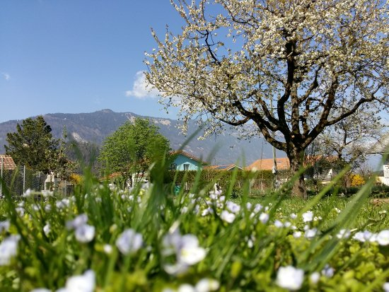 Swiss Holiday House: Our garden with 100 year old Cherry tree and vegetable garden