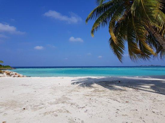 Maayafushi Island: 20180126_150048_large.jpg