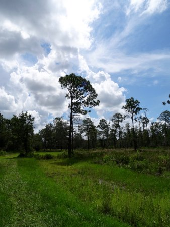 Trinity, Floryda: A stroll through Heartwood Preserve