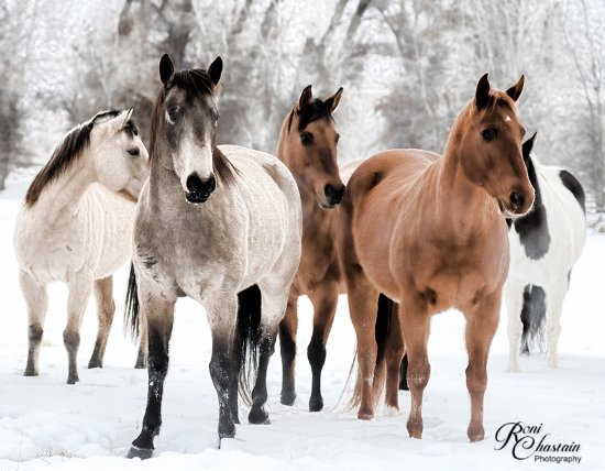 The Hideout Lodge & Guest Ranch: The horses are so well cared for and just beautiful