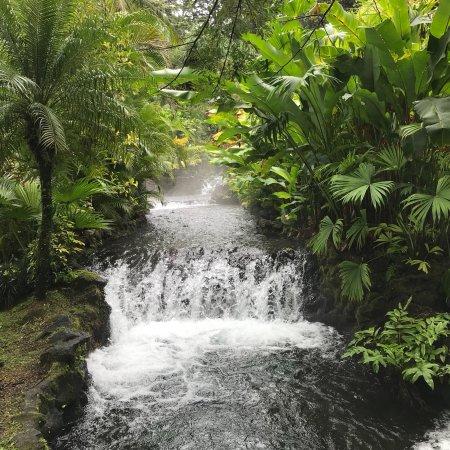 Tabacon Thermal Resort & Spa: photo1.jpg