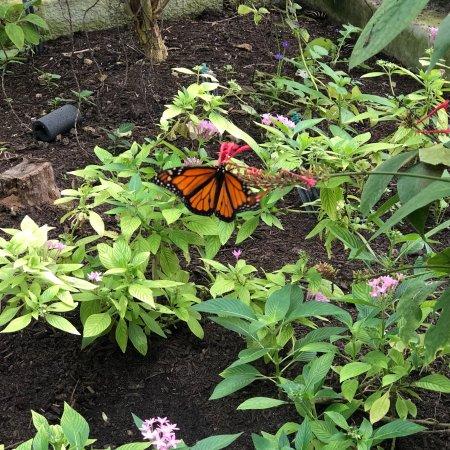Butterfly Estates: photo0.jpg