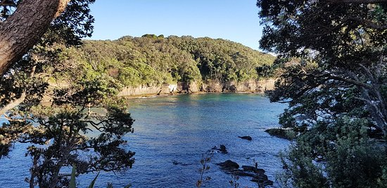 Leigh, Yeni Zelanda: Goat Island Dive & Snorkel