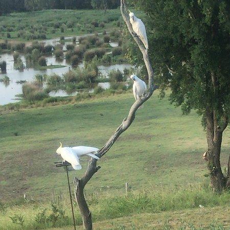 Longford, Australia: photo1.jpg
