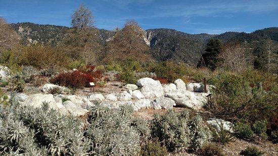 Oak Glen, CA: IMG_20180202_111917065_large.jpg