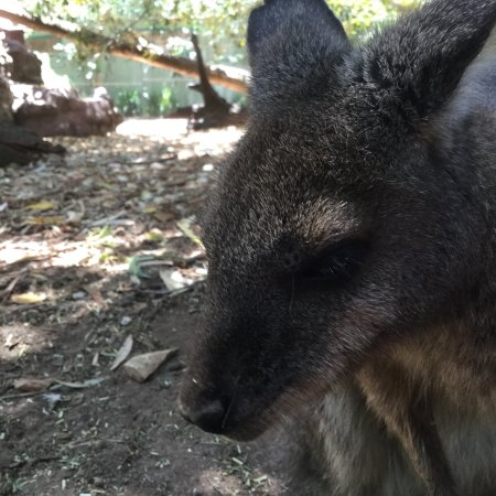 animals at the wild life sydney zoo シドニー シドニー ワイルド