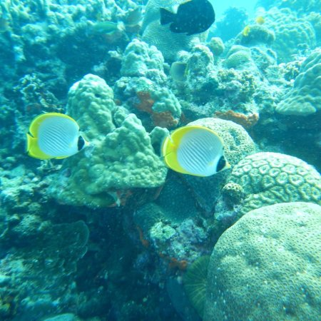 Emerald Green Diving Center - Day Tours : photo0.jpg