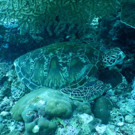 Emerald Green Diving Center - Day Tours : photo3.jpg
