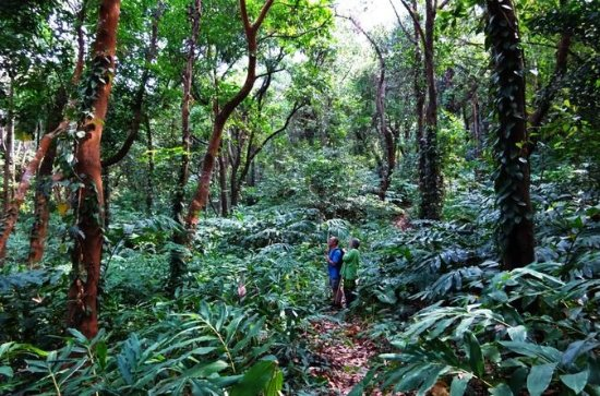 3-Hour Jungle Trekking in Ngapali