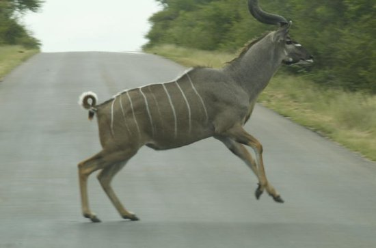 Kruger National Park Day Tour from