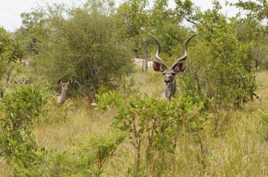 Kruger National Park 3 Days 2 Nights...
