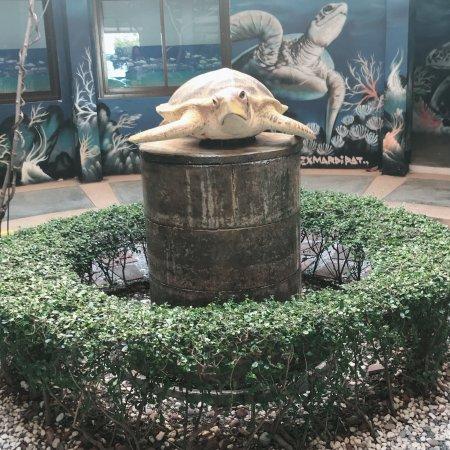 Sea Turtle Conservation Center, Sattahip: photo7.jpg