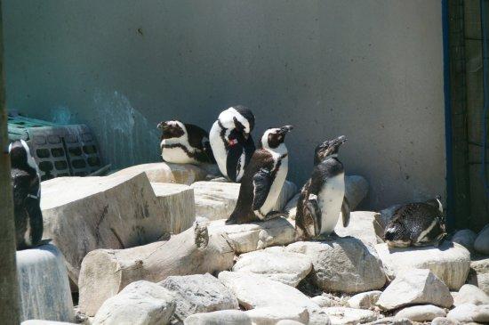 Cape St Francis, Sydafrika: Pinguin-Station