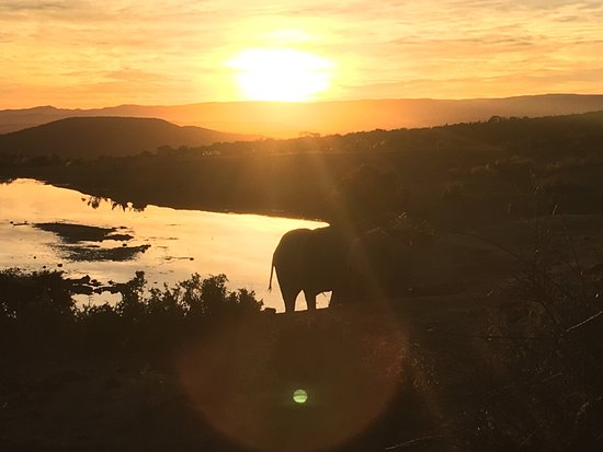 Addo, Sydafrika: Sunset late afternoon full day tour