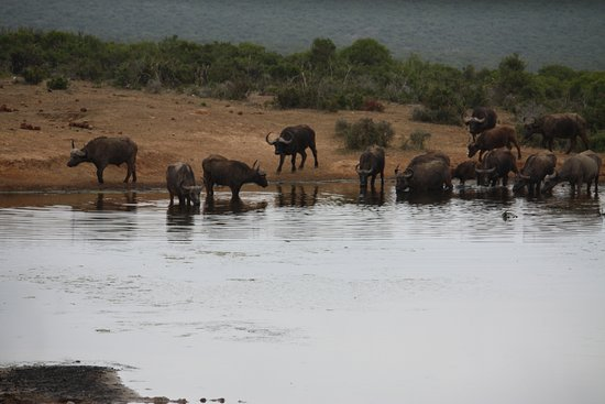 One of the drinking places in the Addo Park on a tour