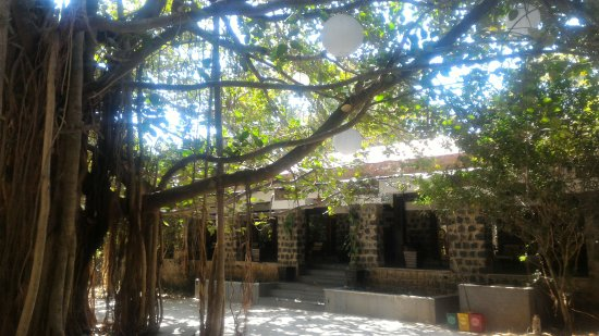 Spring In Vilas Park >> 450 Year Old Banyan Tree With The Reception Lounge Entrance